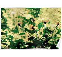 Yellow flowers blowing in the breeze Poster
