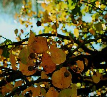 Abstract branches and leaves by Kelly S