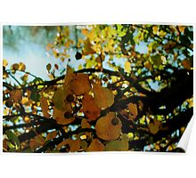 Abstract branches and leaves Poster