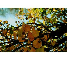 Abstract branches and leaves Photographic Print