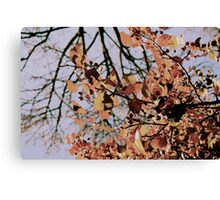 Branches on blue sky Canvas Print
