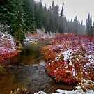 Refresh Me ~Oregon Cascades ~ by Charles & Patricia   Harkins ~ Picture Oregon