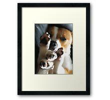 Doggie Yoga Framed Print