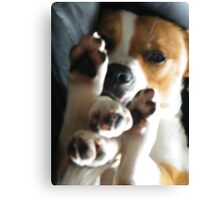 Doggie Yoga Canvas Print