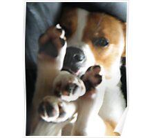 Doggie Yoga Poster