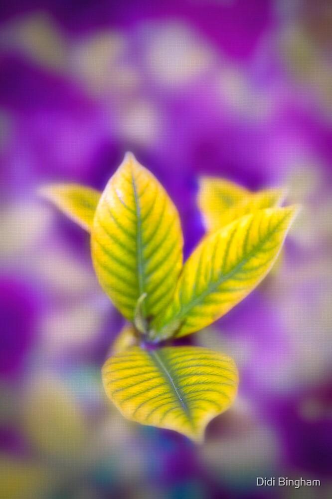 Fleur II by Damienne Bingham