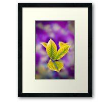 Fleur II Framed Print