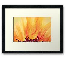 Sunflower II Framed Print