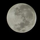 Light in the Darkness...Super Moon by supernan