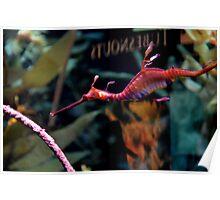 Sea Dragon - New England Aquarium Poster