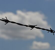 Barbed Wire Against the Summer Sky by Sheryl Gerhard
