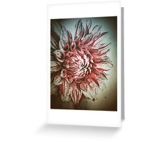 Vintage Dahlia  Greeting Card