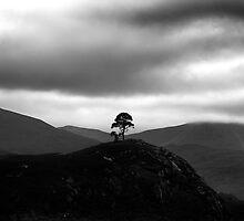 Glen Strathfarrar - Majestic Contrasts by Kevin Skinner