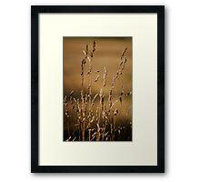 Golden Grasses Framed Print