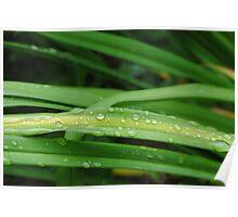 wet grass... Poster