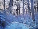 Winter Walk by Denise Abé