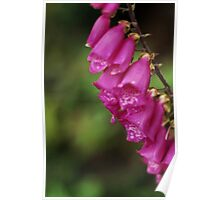 Macro Foxgloves Poster