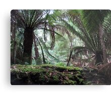 Tropical Rain Forest, Tasmania Metal Print