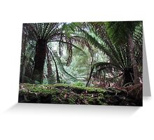 Tropical Rain Forest, Tasmania Greeting Card