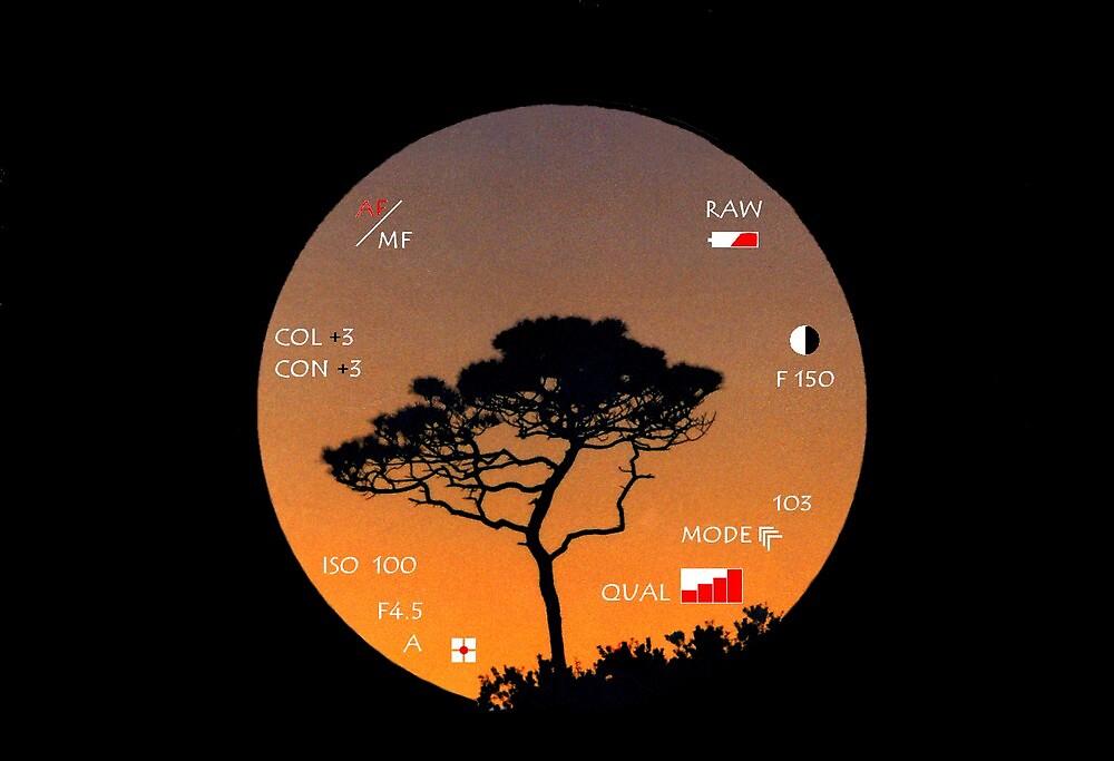 The world through a viewfinder.....  by DaveHrusecky
