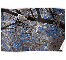 Japanese Flowering Tree Poster