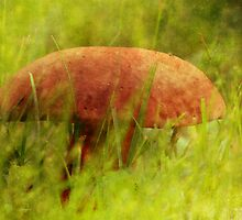Mushroom Cap by vigor