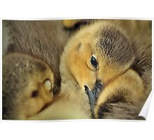 Goose! Poster