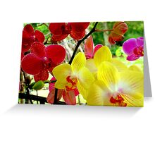 WILD ORCHIDS  Greeting Card