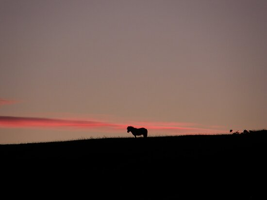 A Horse with no Name   ---    Derry, Ireland by mikequigley