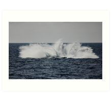 A Whale of a Splash ~ Outer Great Barrier Reef Art Print