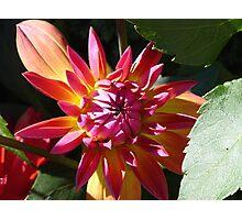 Bright Colors Photographic Print