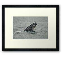 Hey There... Spy Op Framed Print