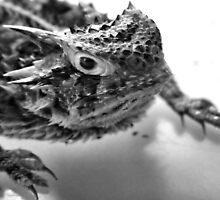 Horny Toad 2 by Carla Jensen