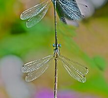 Nature Made Dragon Fly Earring  by Judy Grant