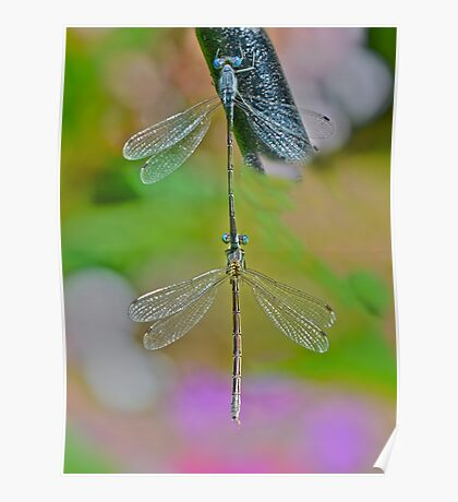 Nature Made Dragon Fly Earring  Poster