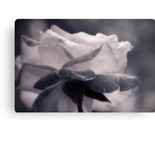 Rose not Red Metal Print