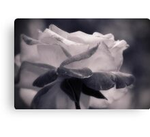 Rose not Red Canvas Print