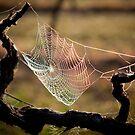 A spider caught a rainbow by Chris Jallard