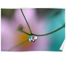 Summer Pendant by Liane Pinel Poster