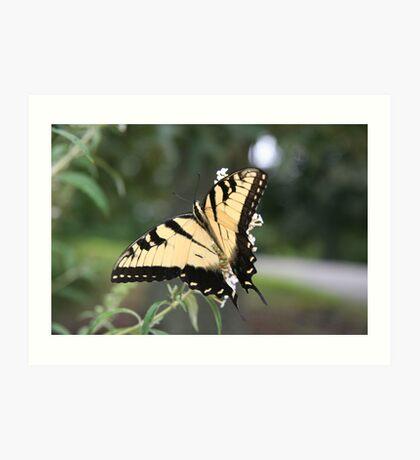 Gentle Tiger 3 Art Print