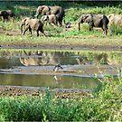 WILDERNESS MAGICAL MOMENTS - The Kruger National Park  by Magriet Meintjes