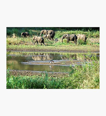 WILDERNESS MAGICAL MOMENTS - The Kruger National Park  Photographic Print