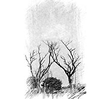 Trees  during winter Photographic Print