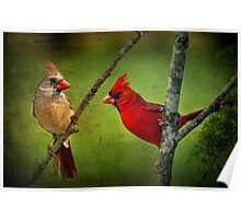 Lovely Pair of Cardinals Poster
