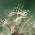 Dandelion by Gregory L. Nance