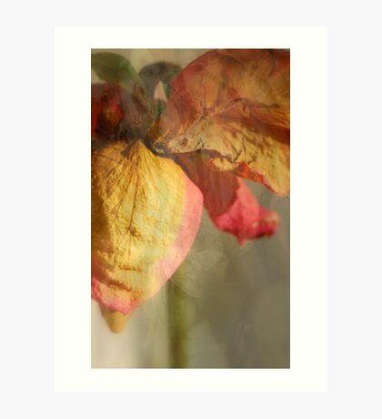 Dried Rose Art Print