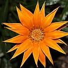 Beautiful orange flower by AriaTees