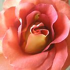 pretty in pink by Oil Water Artt