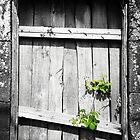 Window by Gaspar Avila