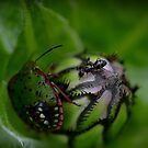 The Beetle and the Ant by Linda Cutche